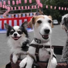お祭りで何食べる~? なんて聞こえてきそうなオレオくん&ジニーちゃんをパチリ。 今週末はPuppyBeans近くの西大井広場公園でお祭りがあります。楽しみです(*^-^*)♪
