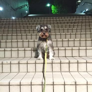 今日は「階段なんて、へっちゃらさ!」なポルトをパチリ。