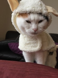 わんちゃんの洋服は、デザインも可愛いものが多く、見ていて楽しくなりますね♪ 今回のブログは、おしゃれだけでないわんちゃんの洋服のメリットをお伝えします♪ https://puppybeans.tokyo/2015/02/20/fashion/