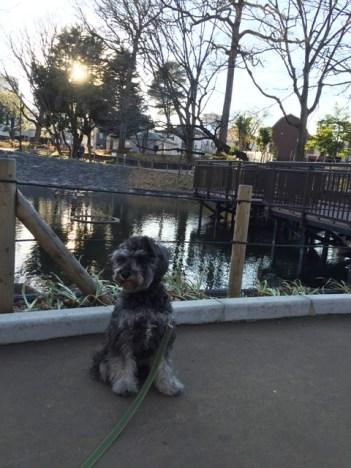 今回は品川区のわんちゃんOKの公園、「文庫の森」をご紹介します。知らなかったのですが災害対策がしっかりされている公園でした。https://puppybeans.tokyo/2015/01/23/osanpo/