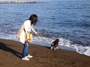 今日の昼間は暖かな晴れ!そうなると海に行きたい~!気持ちになります。写真は初☆海のポルト。繰り返す波におっかなびっくり。海水飲んで後悔したようです(^-^;)