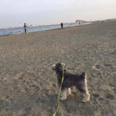 いい波来てるぜ〜なポルトをパチリ。 puppybeansから車で15分程の公園です(o^^o) 夕涼み散歩、しています♪