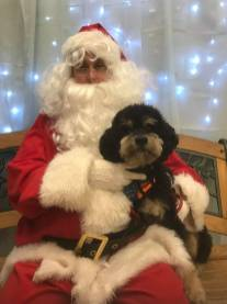 Carolyn P-Duffy now Quincy wasn't a mill dog...he came from the Buffalo shelter but we saved him because he was posted in the mill group. He has fear issues but is conquering them and was able to get his picture with Santa