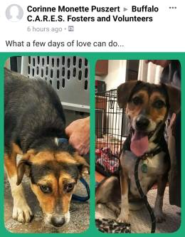 Deb S - Shared with permission, this is the scared Beagle mix that just came Thursday. She was very scared & shy upon arrival but now has blossomed!