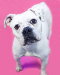 Frannie was rescued with PRO and the Puppy Mill Rescue Team
