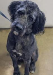 Gunner was rescued with PRO and the Puppy Mill Rescue Team