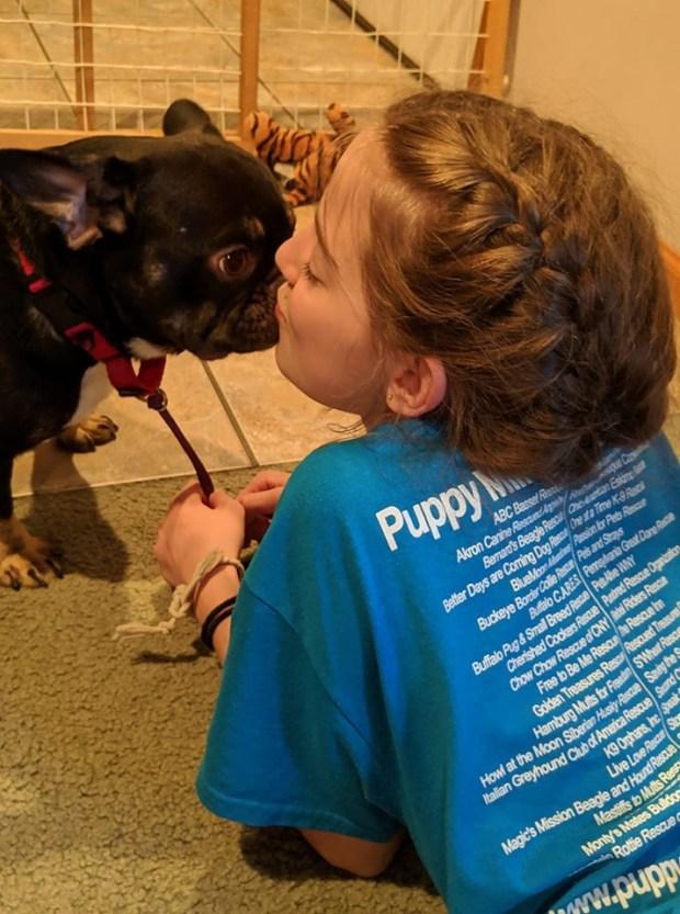News – Puppy Mill Rescue Team