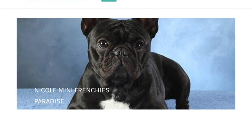 Nicoleteacups.net - French Bulldog Puppy Scam Review
