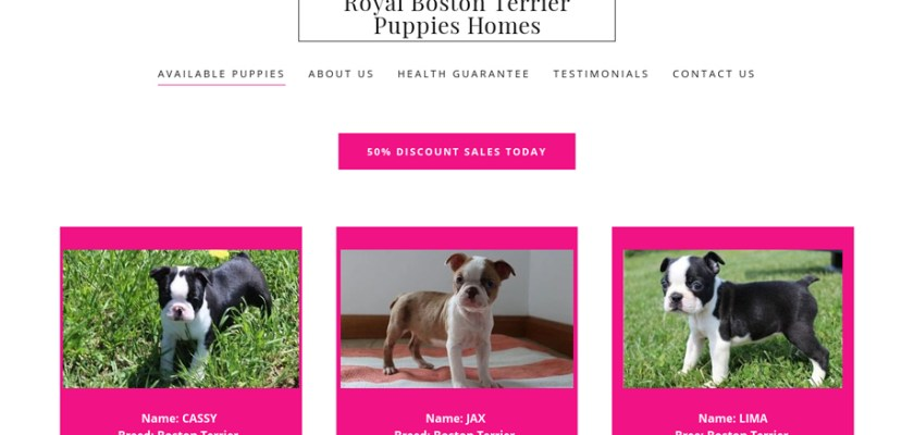 Royalbostonterrierhomes.com - Boston Terrier Puppy Scam Review