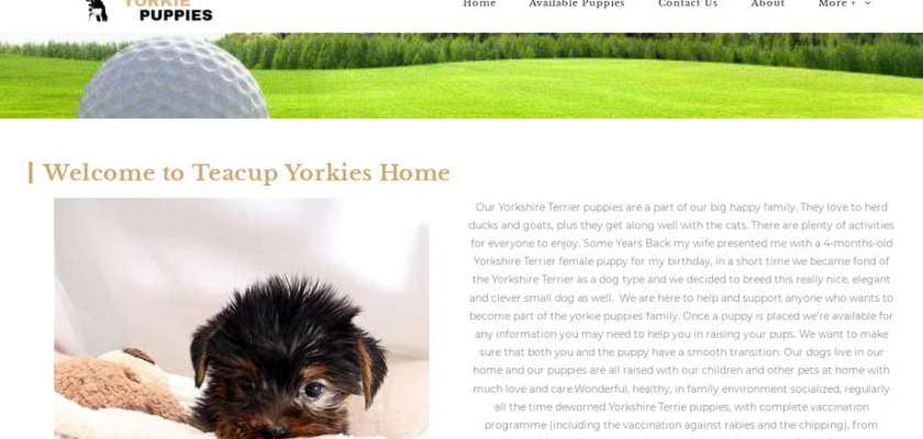 Teacup-yorkie-puppies.com - Yorkshire Terrier Puppy Scam Review