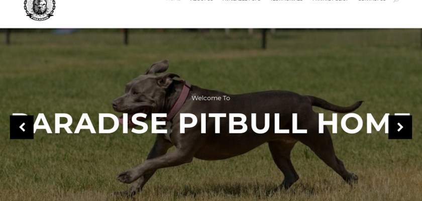 Paradisepitbullhome.com - Pit Bull Puppy Scam Review