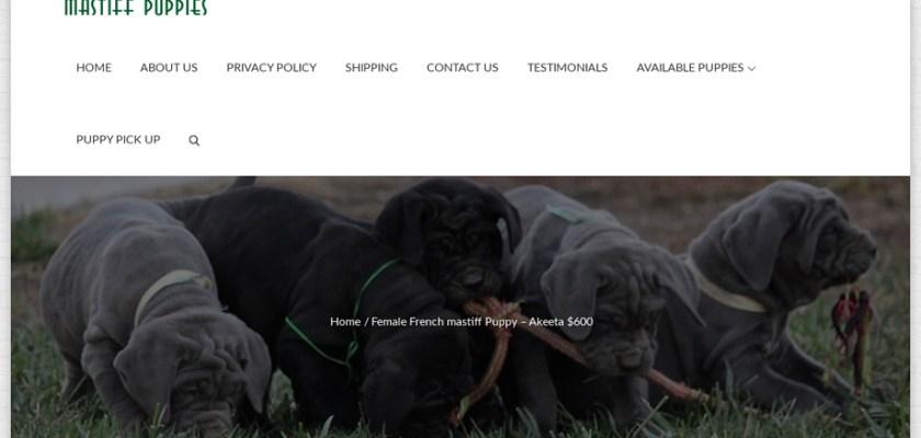 Fairlandmastiffpuppies.us - Tibetan Mastiff Puppy Scam Review