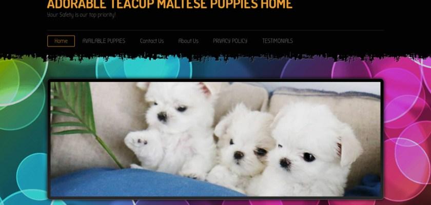 Happyteacuphome.com - Maltese Puppy Scam Review