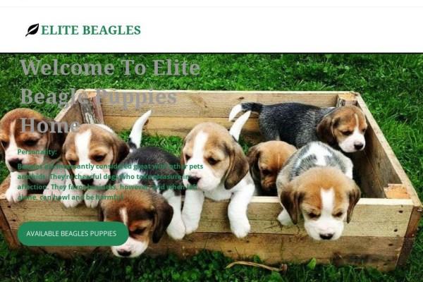 Elitebeaglepuppies.com - Beagle Puppy Scam Review
