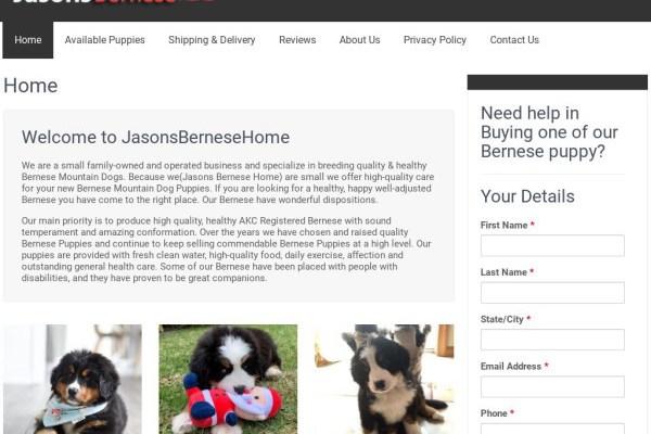 Jasonsbernesehome.com - Bernese Mountain Dog Puppy Scam Review
