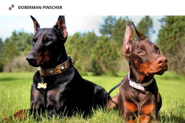 Skilfuldobermanpinscherpups.com - Doberman Pinscher Puppy Scam Review