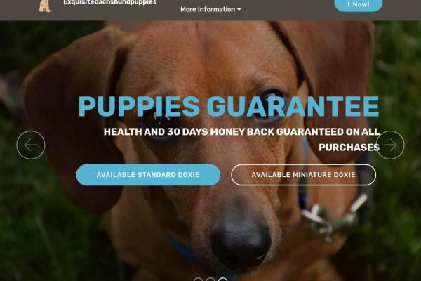 Exquisitedachshundpuppies.com - Dachshund Puppy Scam Review