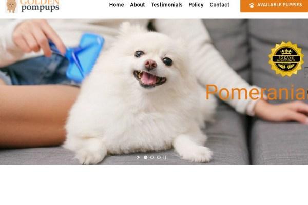 Goldenpompups.com - Golden Retriever Puppy Scam Review