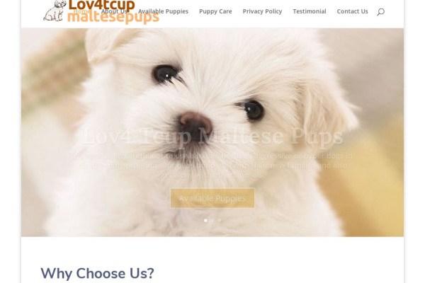 Lov4tcupmaltesepups.com - Maltese Puppy Scam Review
