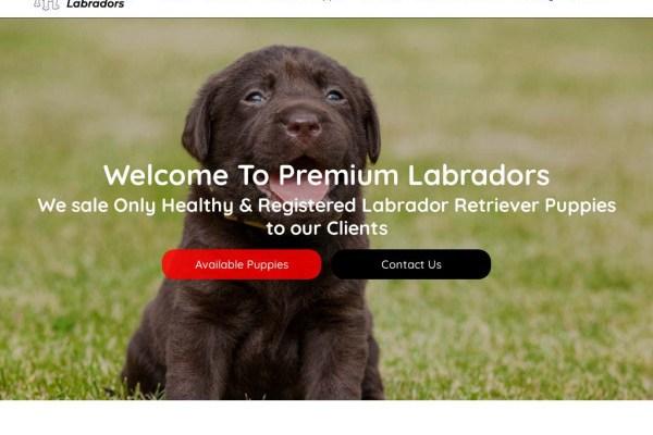 Premiumlabradors.com - Labrador Puppy Scam Review