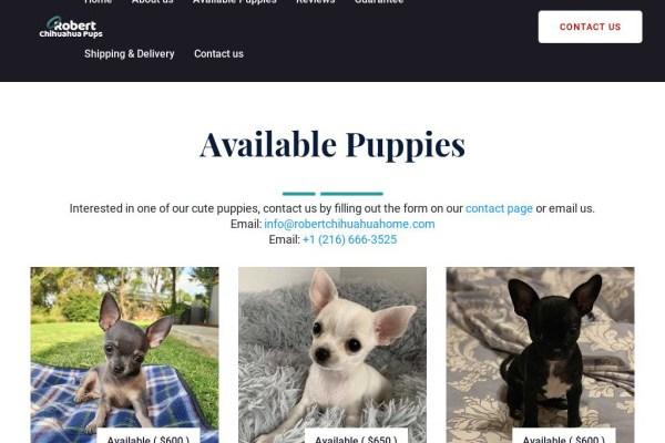 Robertchihuahuahome.com - Chihuahua Puppy Scam Review