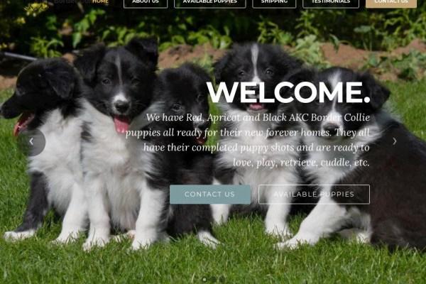 Bordercollieworld.com - Bordercollie Puppy Scam Review
