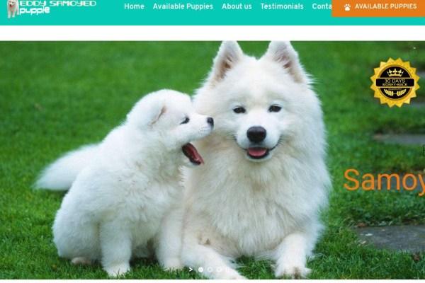 Eddysamoyedpuppies.com - Samoyed Puppy Scam Review