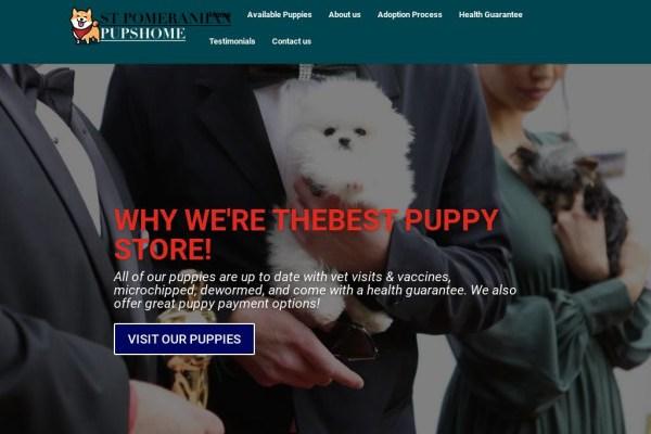 Stpomeranianpupshome.com - Pomeranian Puppy Scam Review