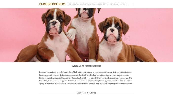 Purebreedboxers.com - Boxer Puppy Scam Review