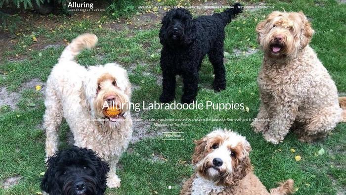 Alluringlabradoodlepups.com - Labradoodle Puppy Scam Review