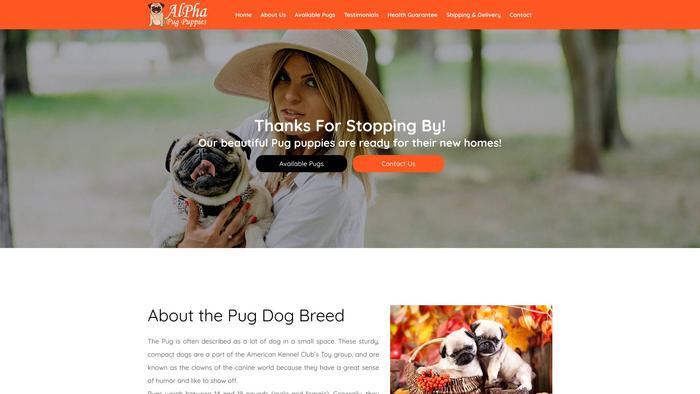 Alphapugpuppies.com - Pug Puppy Scam Review