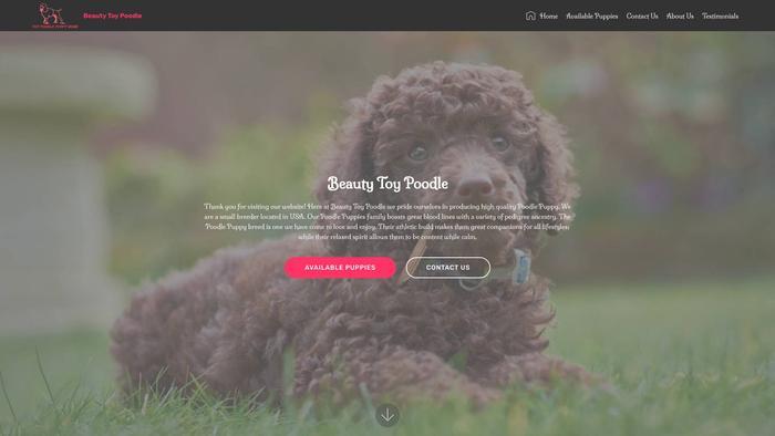 Beautytoypoodle.com - Poodle Puppy Scam Review