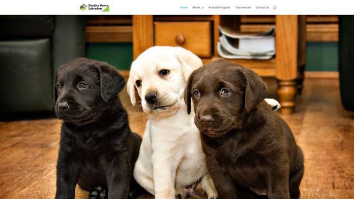 Destinyhomelabradors.com - Labrador Puppy Scam Review