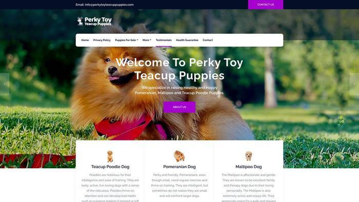 Perkytoyteacuppuppies.com - Pomeranian Puppy Scam Review