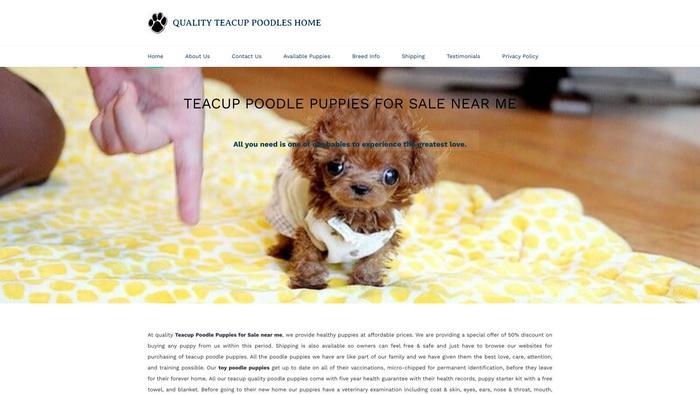 Qualitytoypoodle.com - Poodle Puppy Scam Review