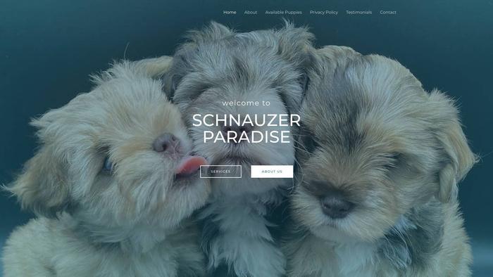 Schnauzersparadise.com - Schnauzer Puppy Scam Review