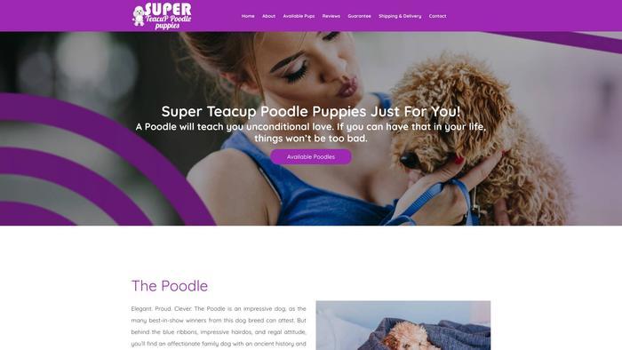 Superteacuppoodlepuppies.com - Poodle Puppy Scam Review