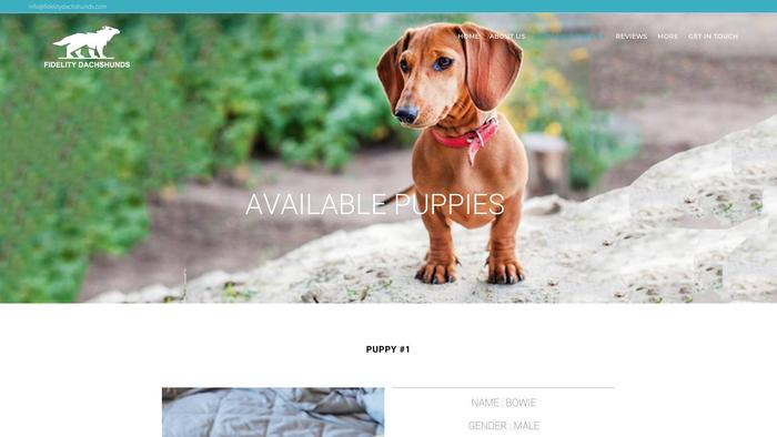 Fidelitydachshunds.com - Dachshund Puppy Scam Review