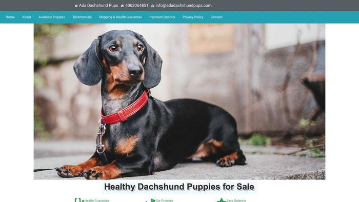 Adadachshundpups.com - Dachshund Puppy Scam Review