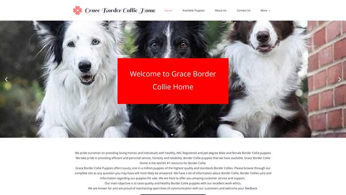 Gracebordercolliepuppies.com - Bordercollie Puppy Scam Review