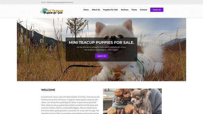 Miniteacuppuppiesforsale.net - Yorkshire Terrier Puppy Scam Review