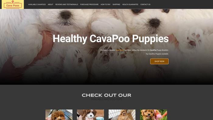 Teacupcavapoopuppies.com - Cavapoo Puppy Scam Review