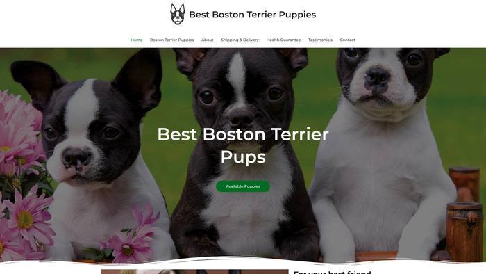 Thebestbostonterrierpuppies.com - Boston Terrier Puppy Scam Review
