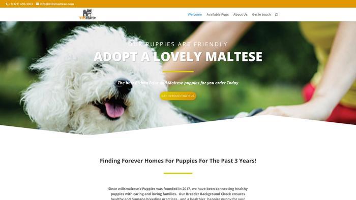 Willsmaltese.com - Bichon Frise Puppy Scam Review