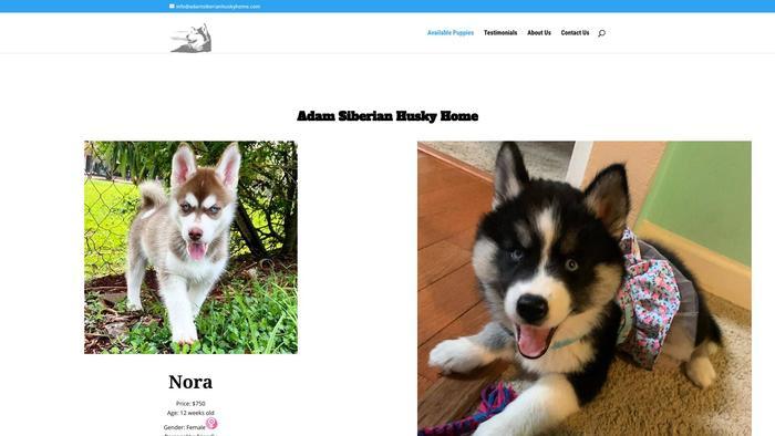 Adamsiberianhuskyhome.com - Husky Puppy Scam Review