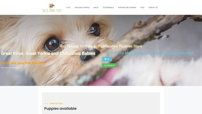 Bolisyorkiepups.com - Yorkshire Terrier Puppy Scam Review