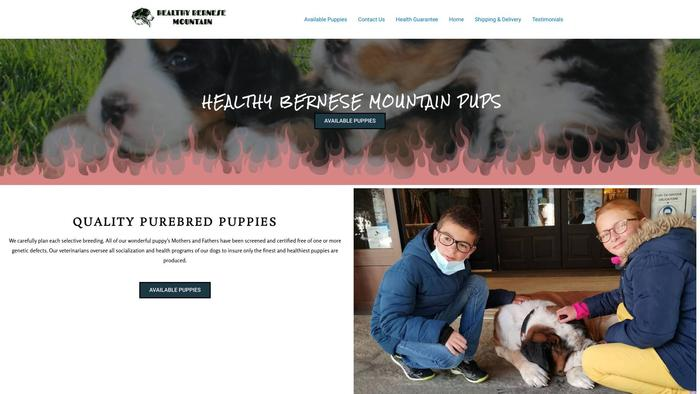 Healthybernesemountain.com - Bernese Mountain Dog Puppy Scam Review