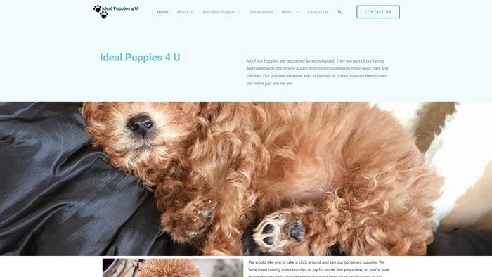 Idealpuppies4u.com - Labrador Puppy Scam Review