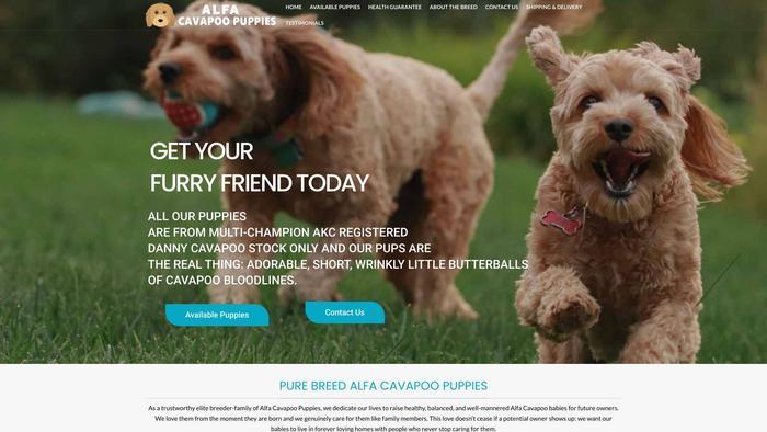 Alfacavapoopuppies.com - Cavapoo Puppy Scam Review
