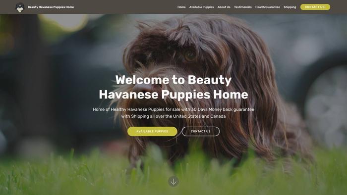 Beautyhavanesepuppieshome.com - Havanese Puppy Scam Review